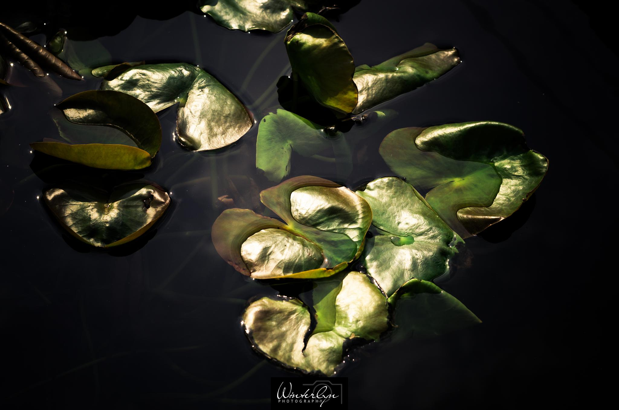 Untitled by Winterlyn Photography