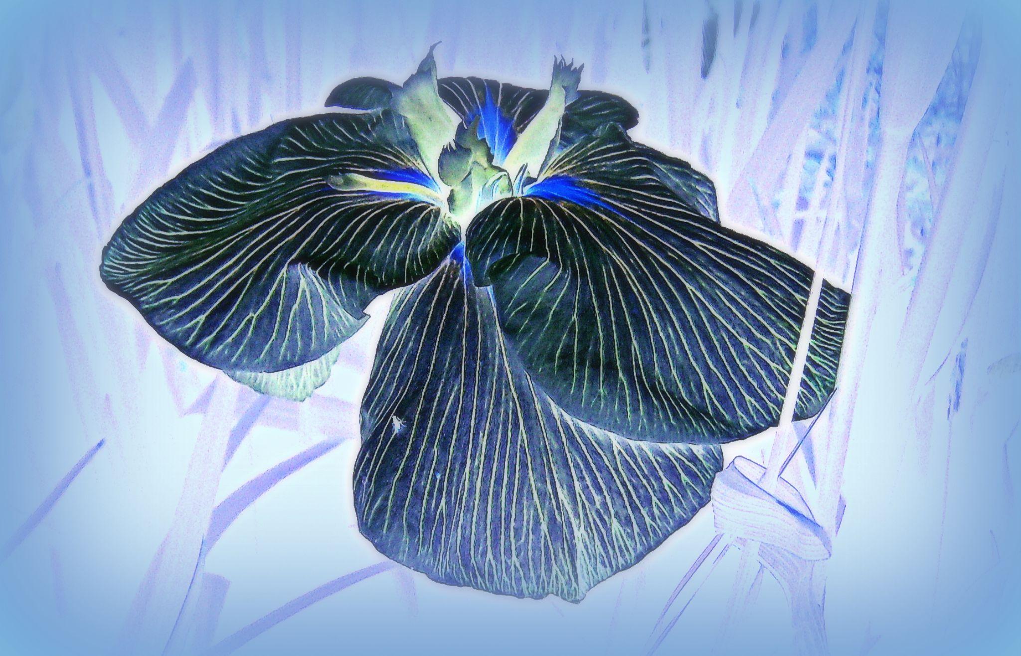 Feeling Blue... by Michelle Dimascio