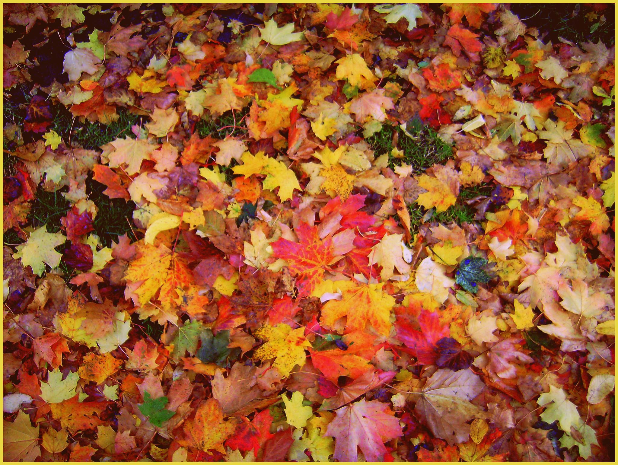 Autumn Colour by Michelle Dimascio