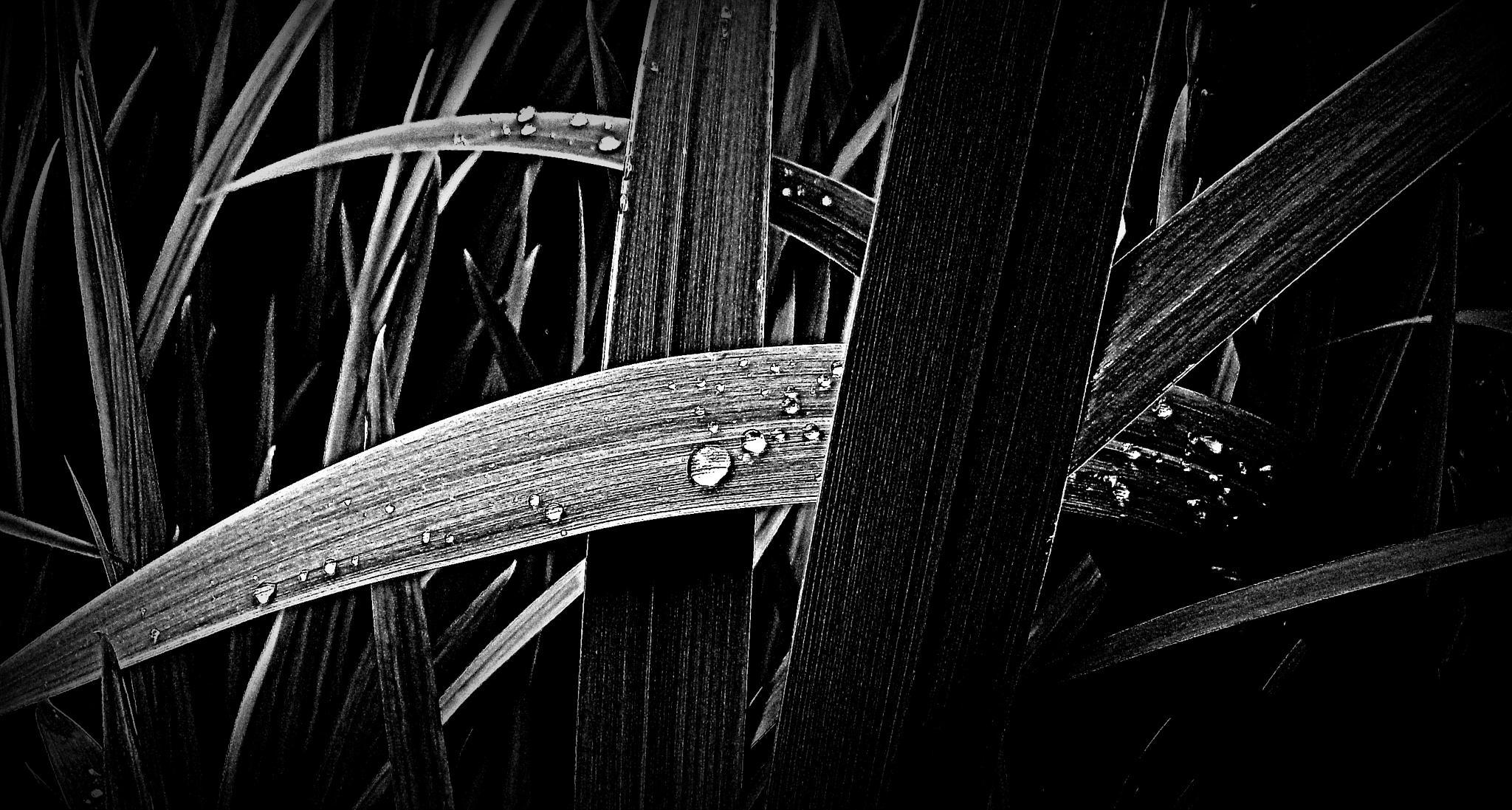 Tear drops... by Michelle Dimascio