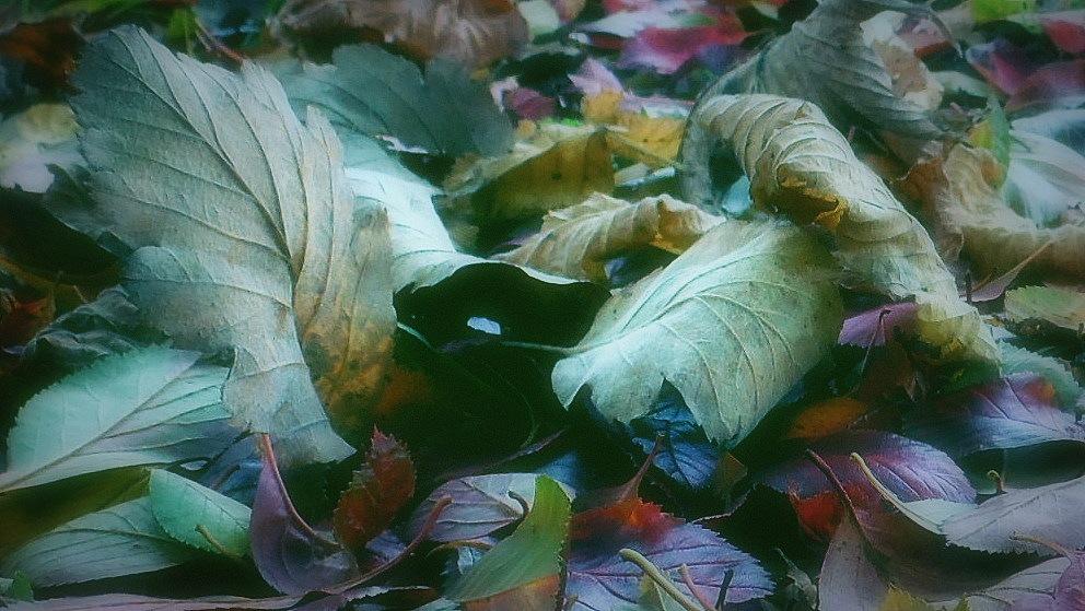 Untitled by Michelle Dimascio