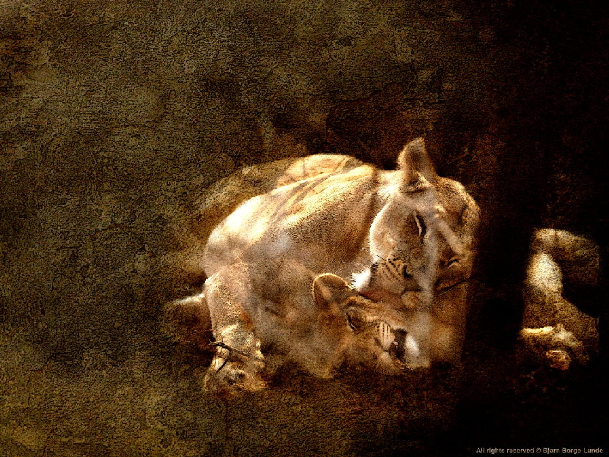 Photo in Fine Art #lion #lioness #cub #africa #wildlife #nature #animals #big cats
