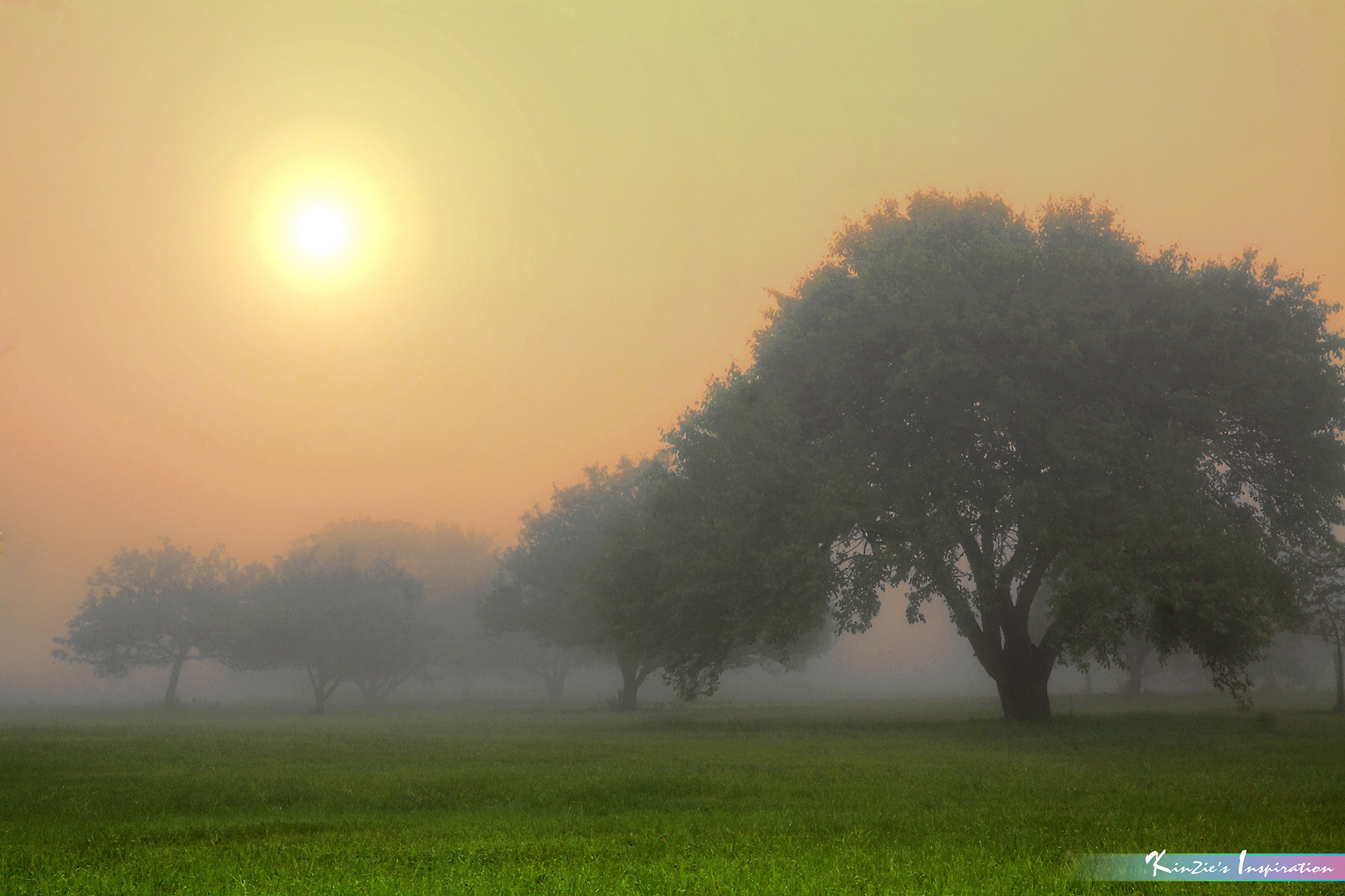 A Foggy Morning *A Beautiful Nature* by iLOVEnature's Photography Inspiration