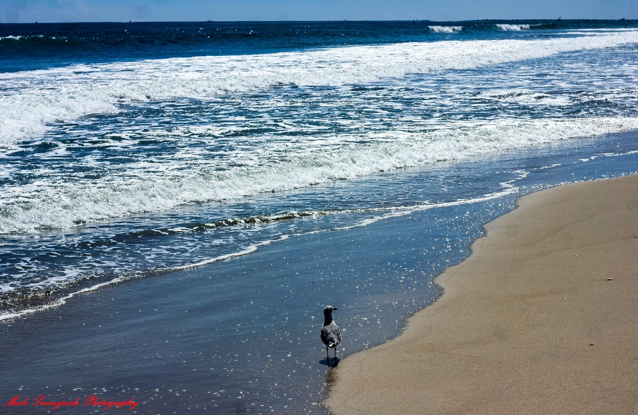 Pepper Beach  by Mick Swengrosh