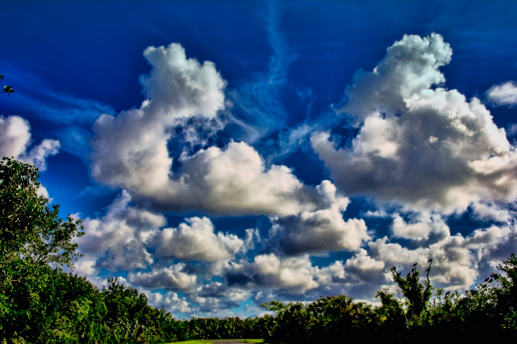 Clouds over the Everglades  by Mick Swengrosh