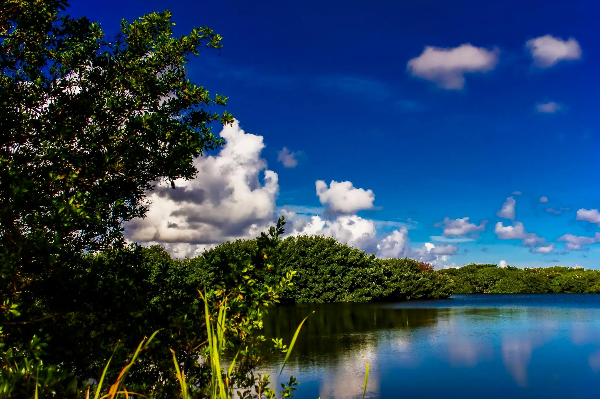 Nine Mile Pond  by Mick Swengrosh