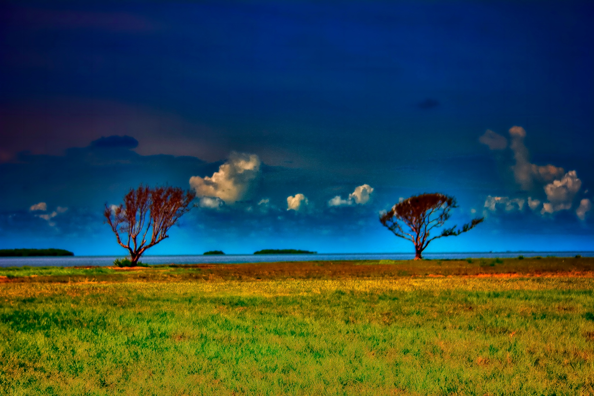 Twin Trees & The Florida Bay  by Mick Swengrosh