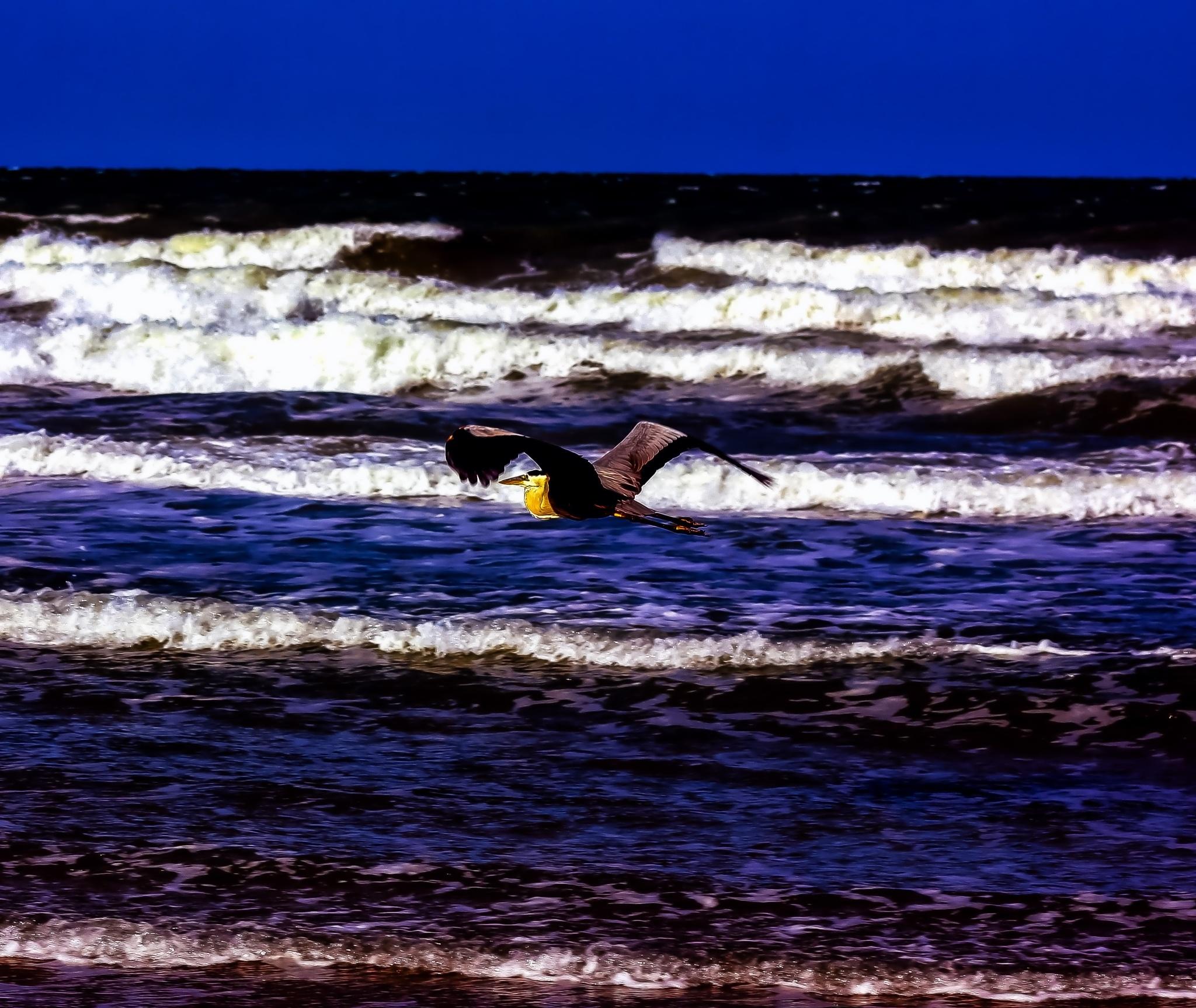 Freebird by Mick Swengrosh