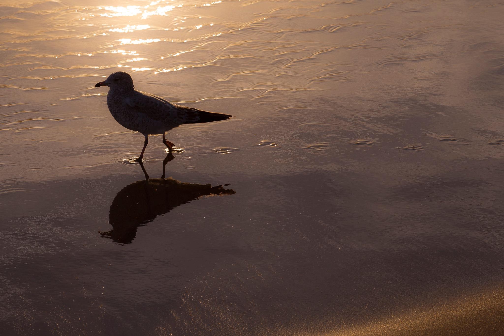 A Walk on the Beach by Steve Fraser