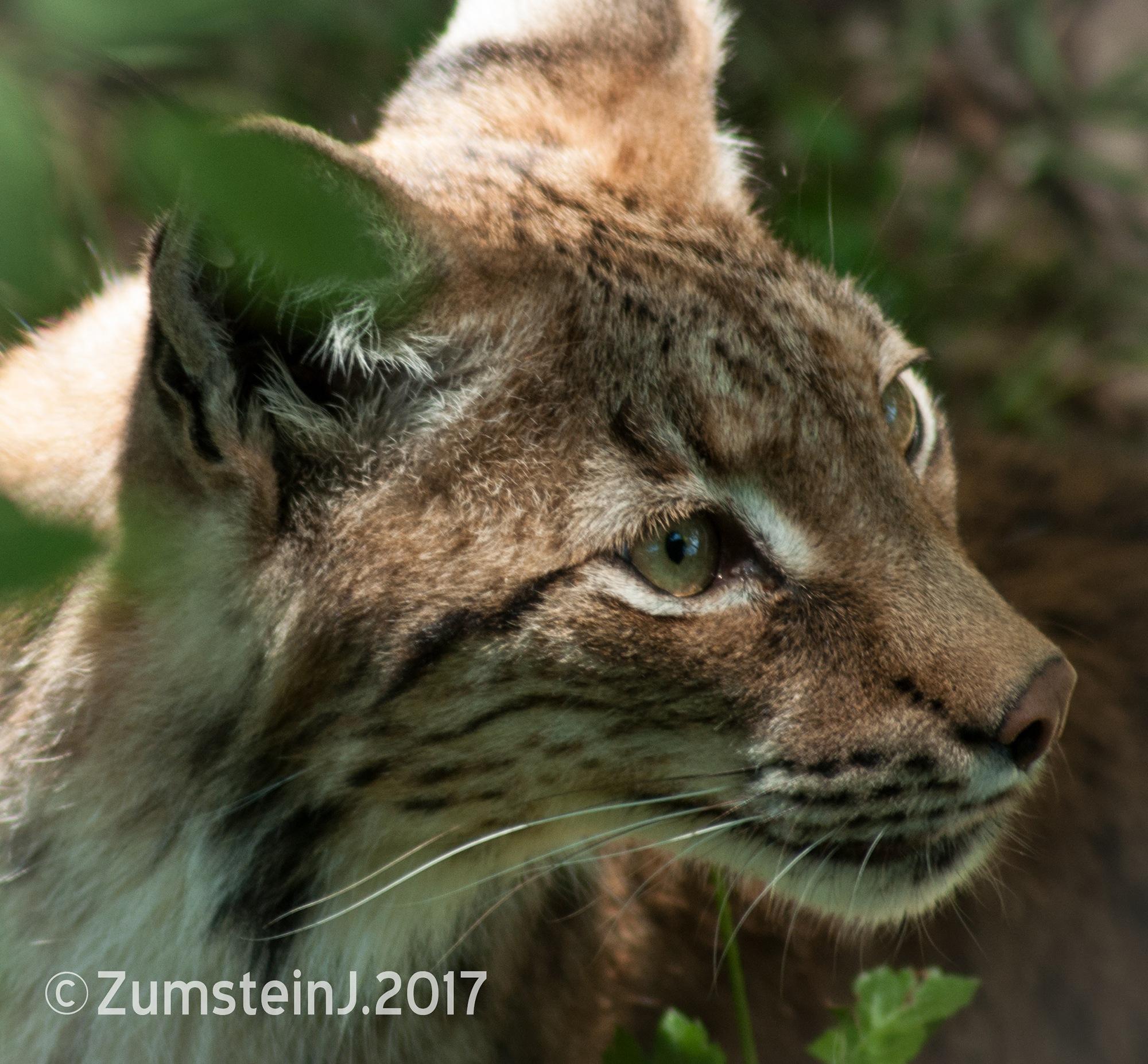 Wild boy by Zumstein Jacqui