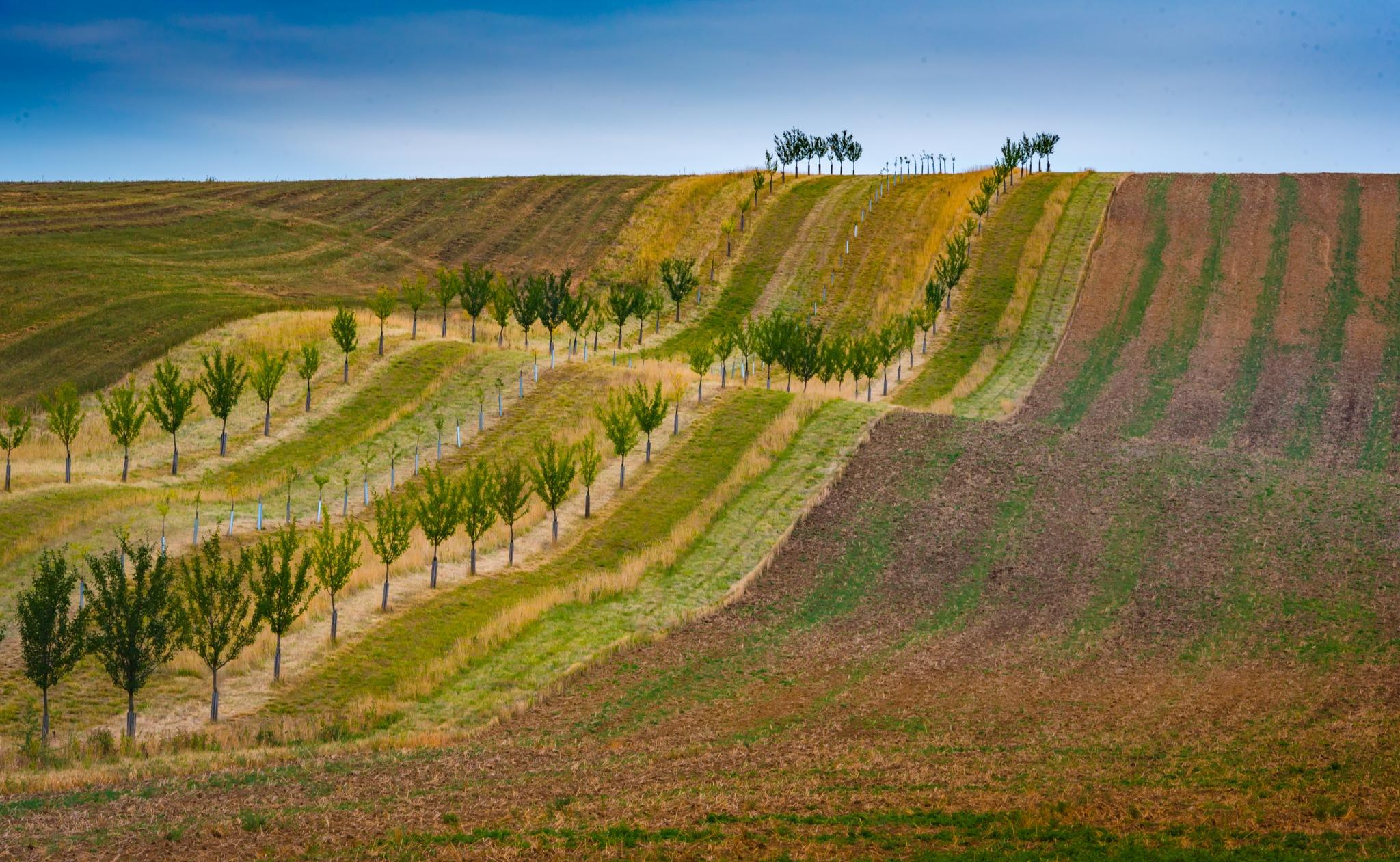Strips of field by JurajNovak
