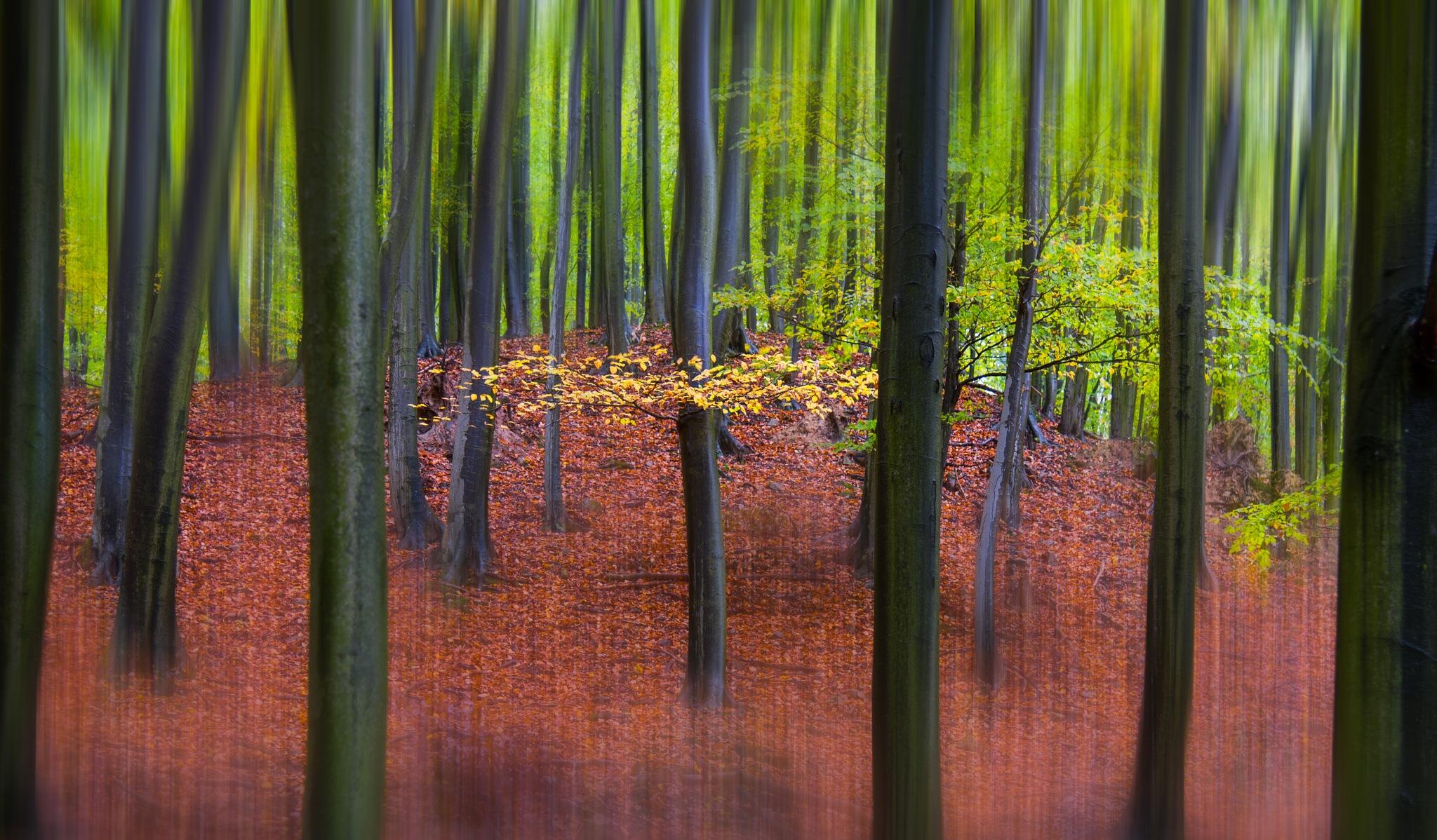 Autumn forrest by JurajNovak