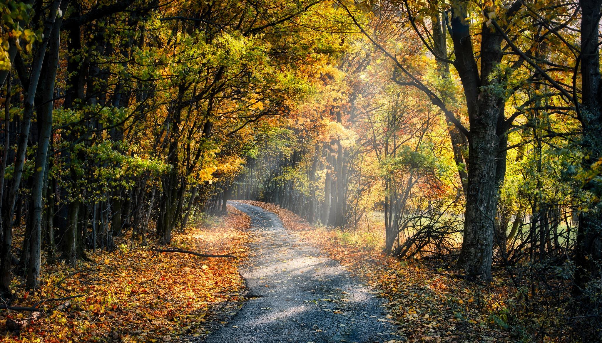 Autumn road by JurajNovak