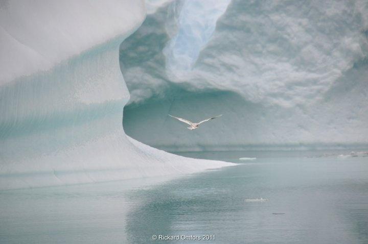 Freedom in Greenland! by Rickard Omfors