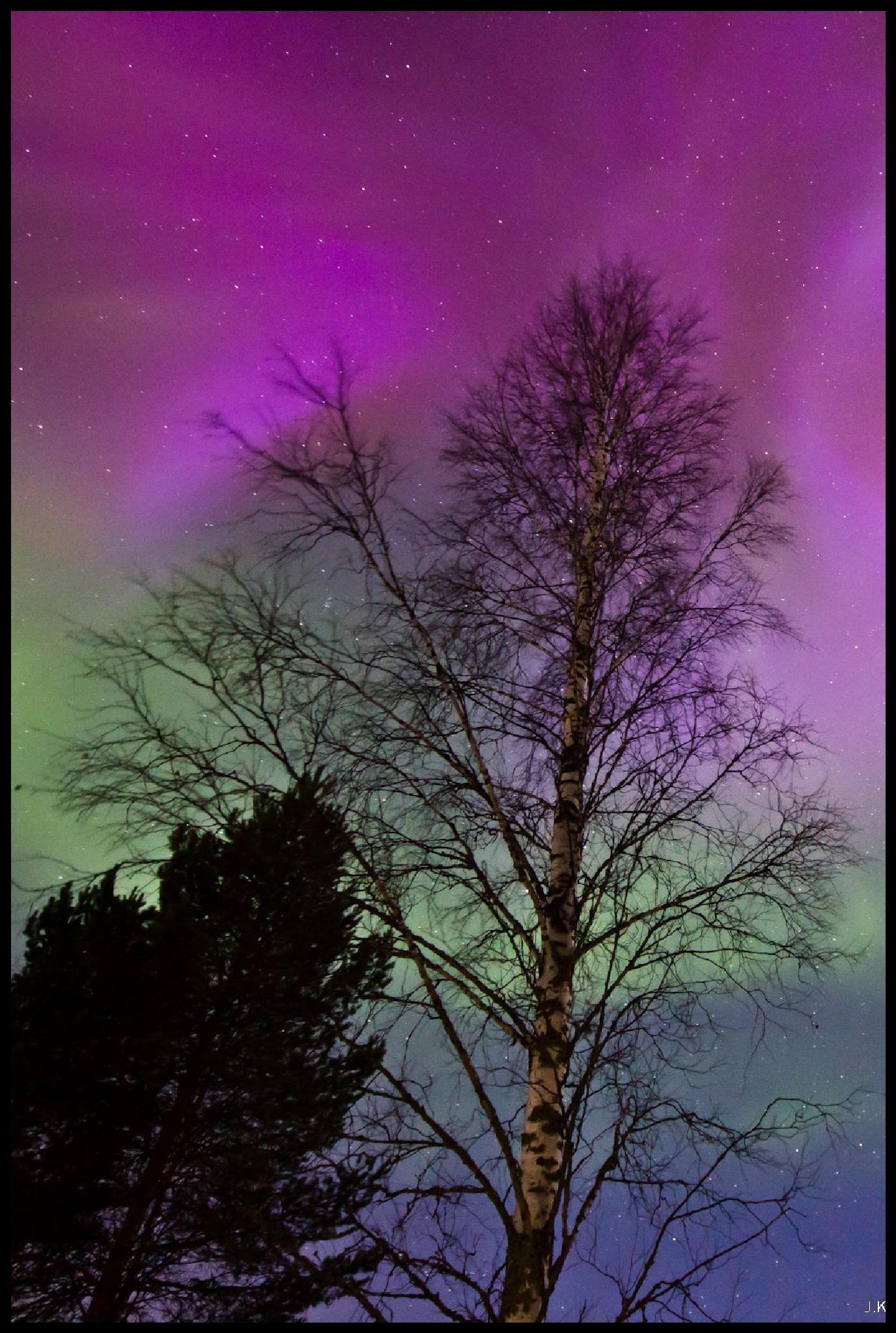 Northern Lights and birch by Johanna