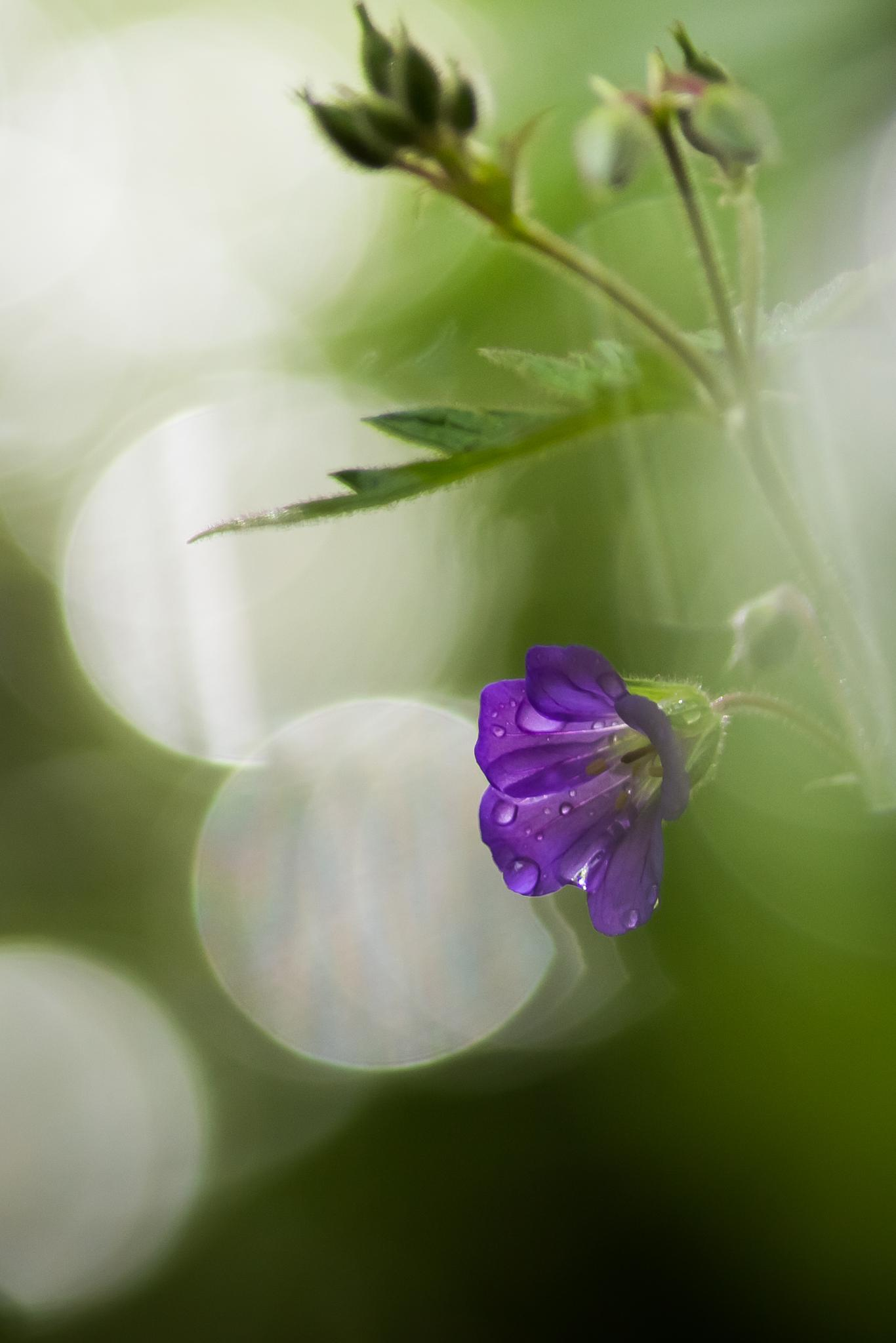 summer flower by Johanna