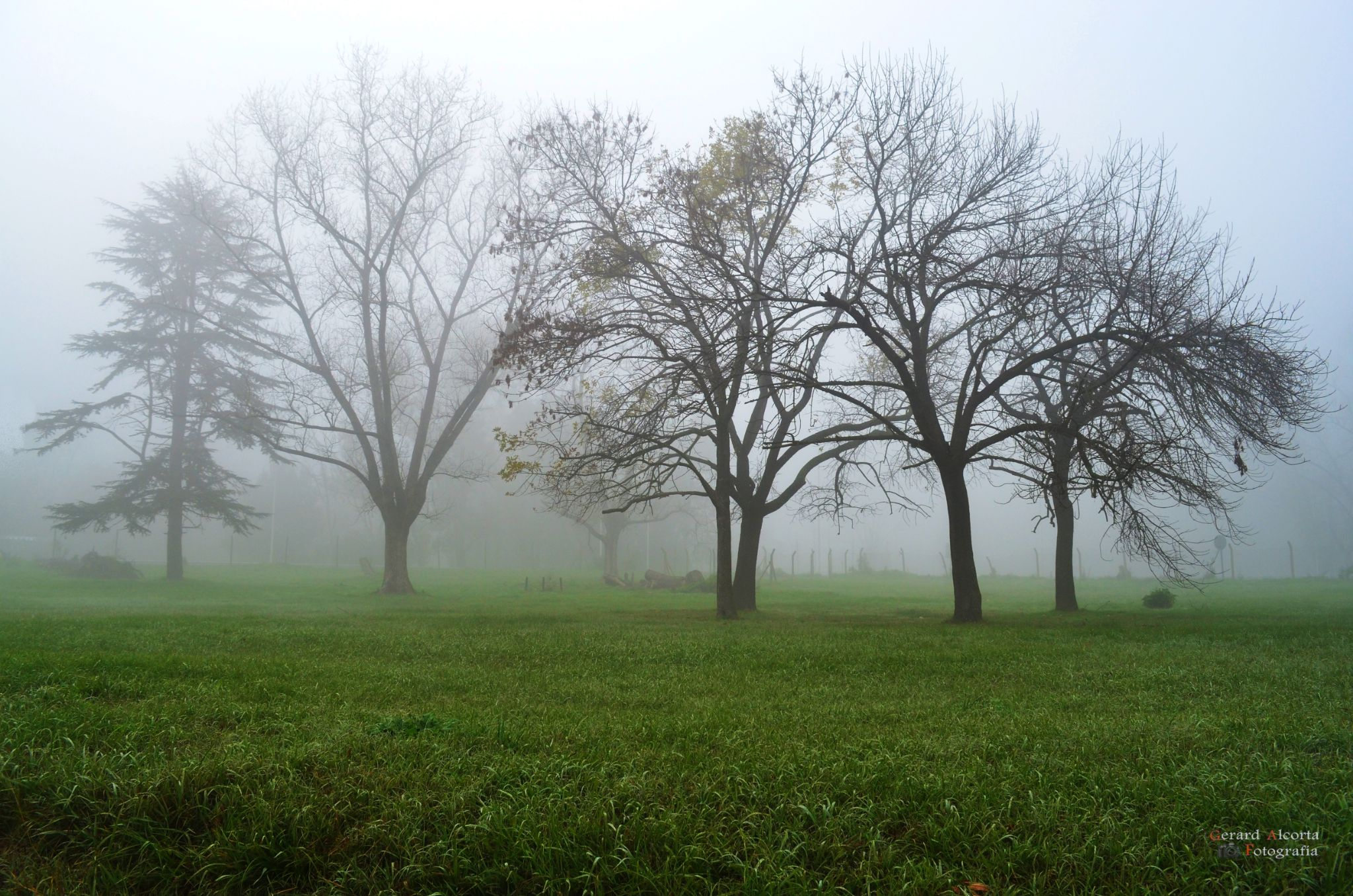Niebla by gerard