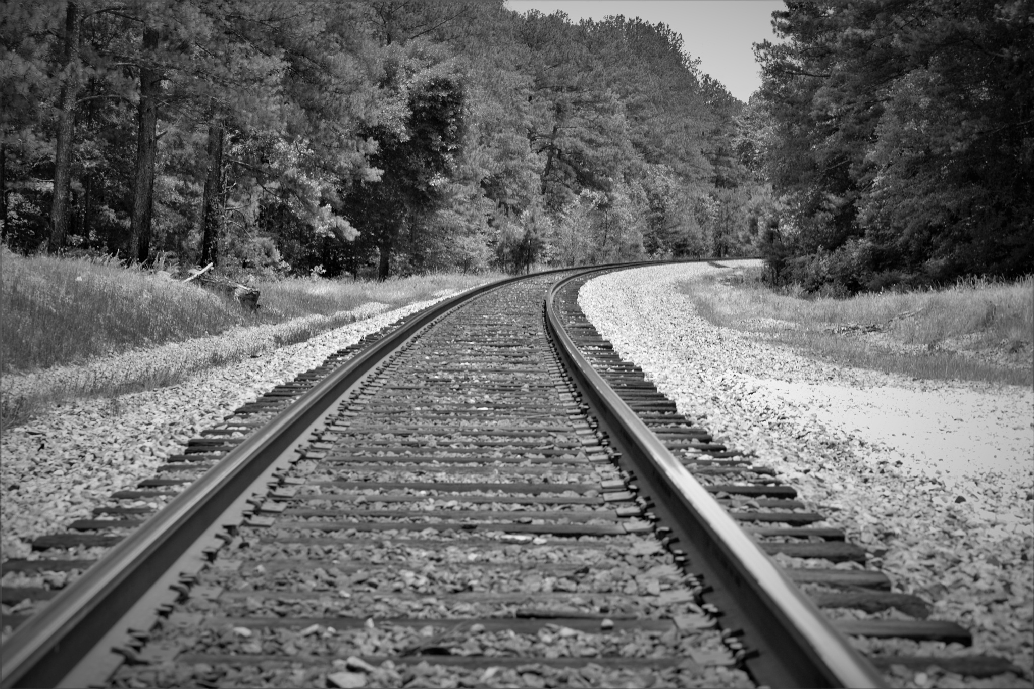 Photo in Black and White #train #tracks #railroad #crossing #rail #sumter #national #forest #south carolina #s.c.