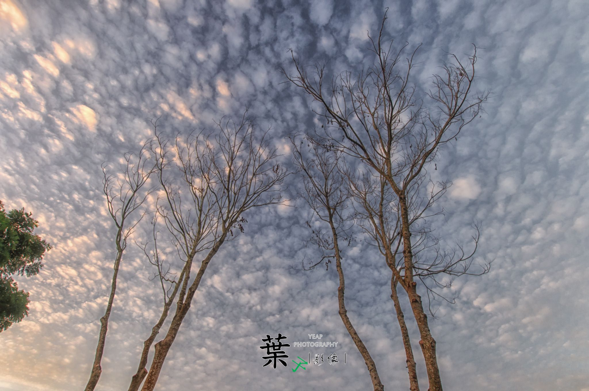 The Evening  by Chun Siang Yeap