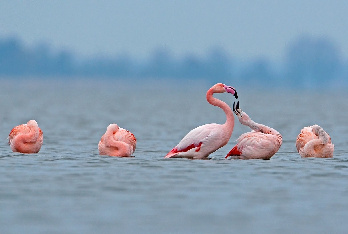 Flamingo's by KarinPeters