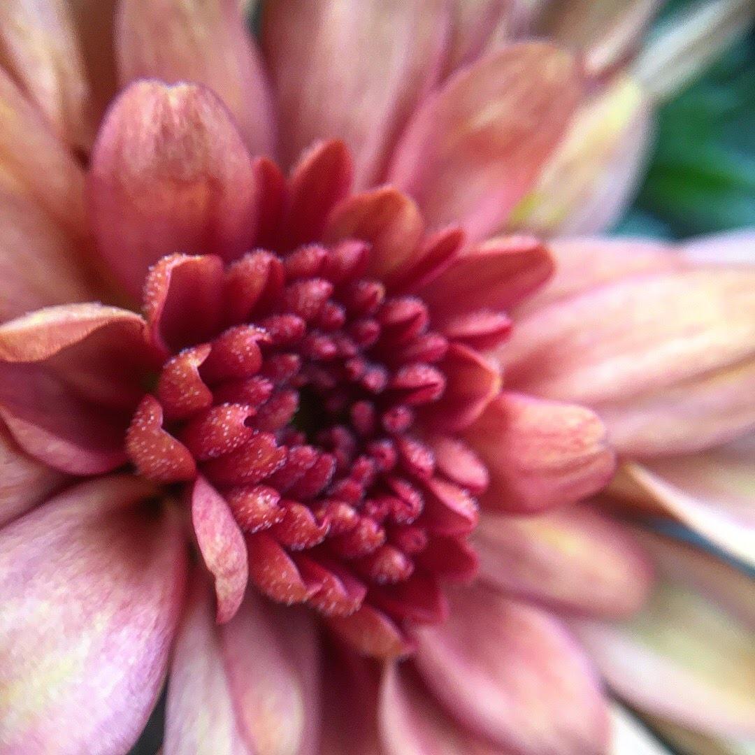 flower power  by Tamsyn Gustar