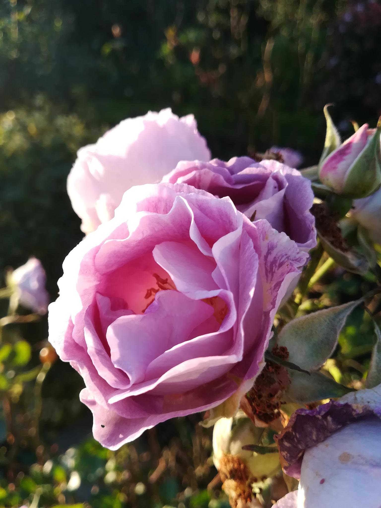 pretty flower  by Tamsyn Gustar