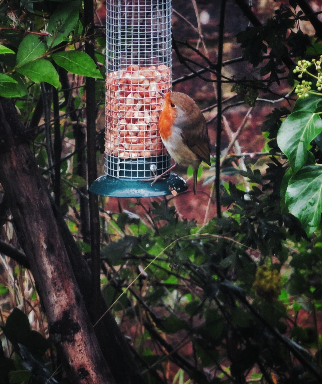 He likes his bird feeder! by Tamsyn Gustar