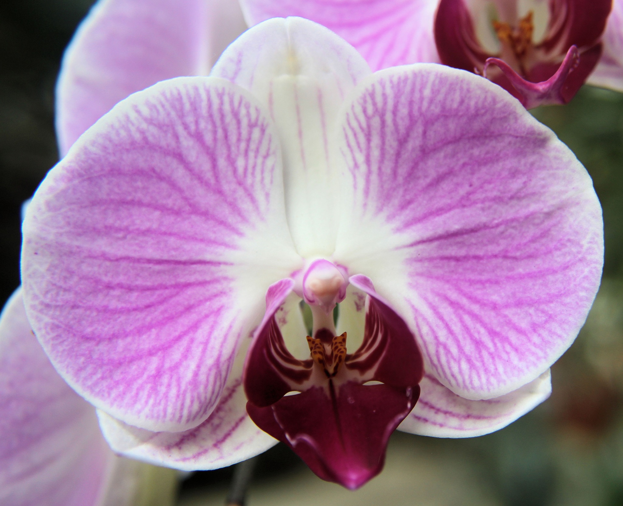 orchid by jdwines