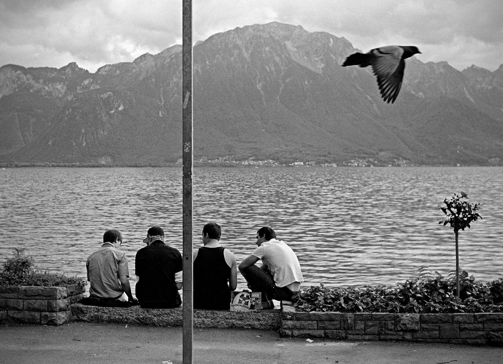 Pigeons by Marek Fogiel