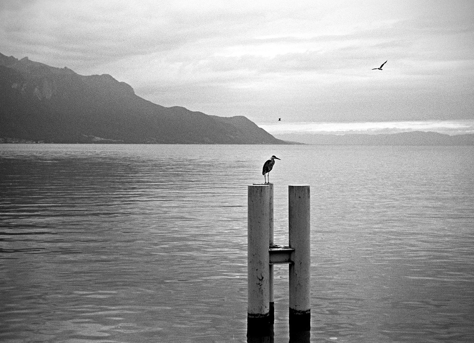Heron by Marek Fogiel
