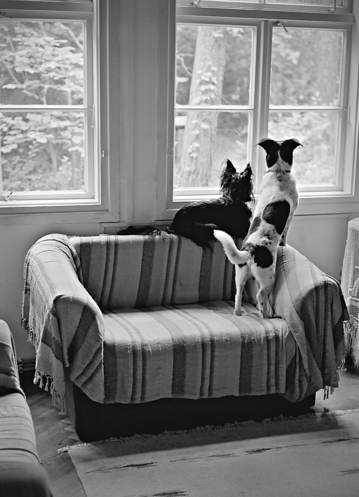 Friends by Marek Fogiel