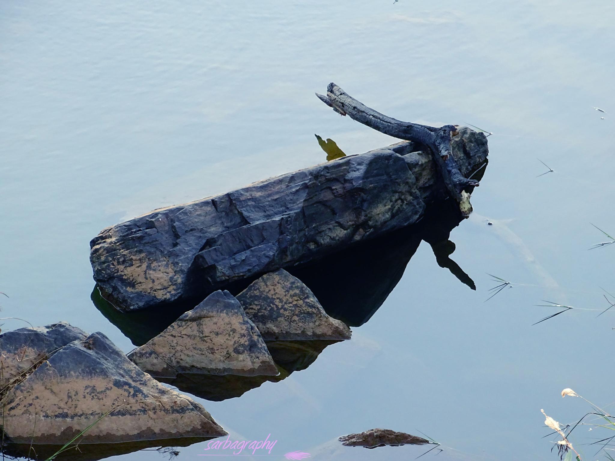 BALANCING by Sarbajit Chatterjee