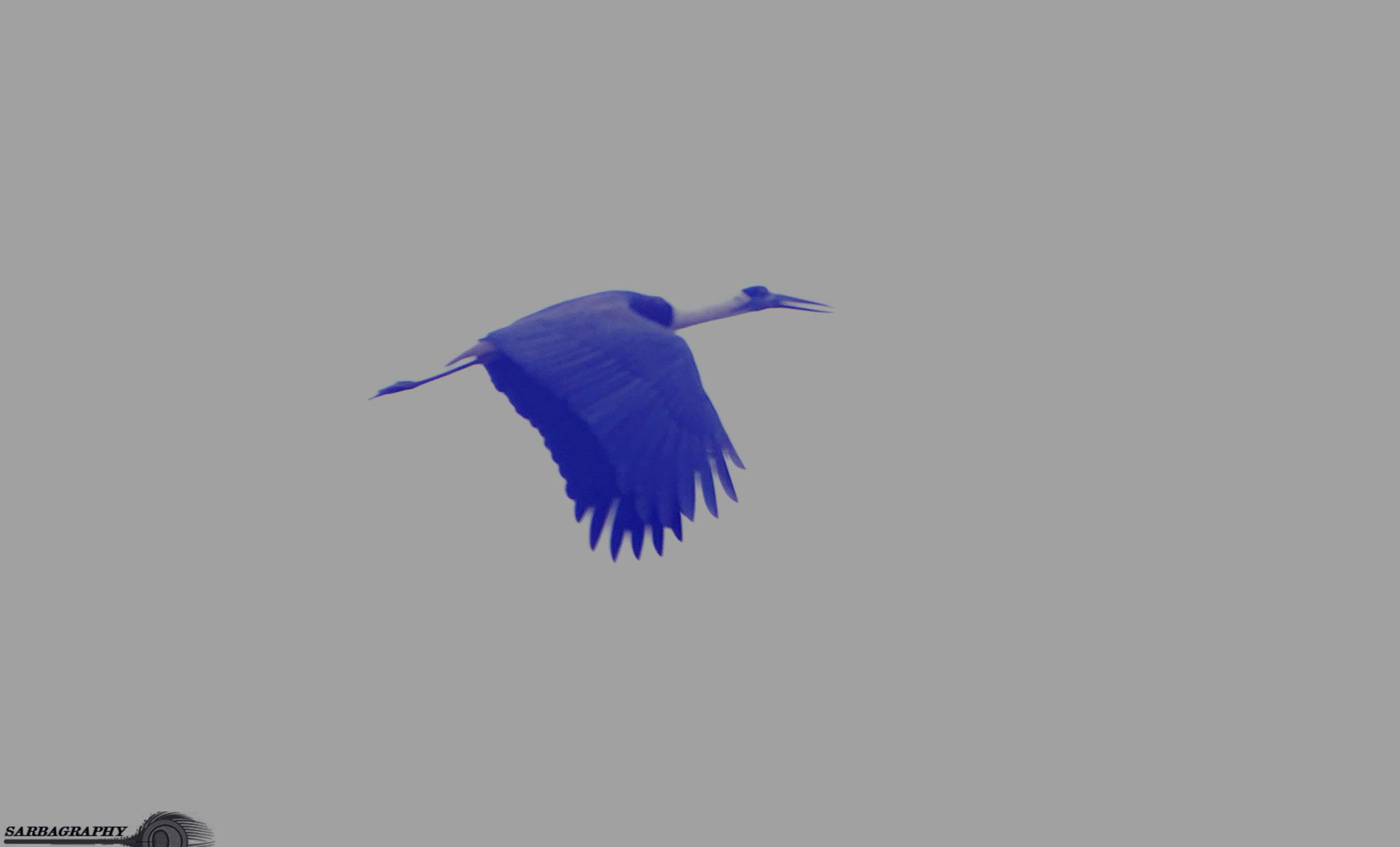 Fly High by Sarbajit Chatterjee