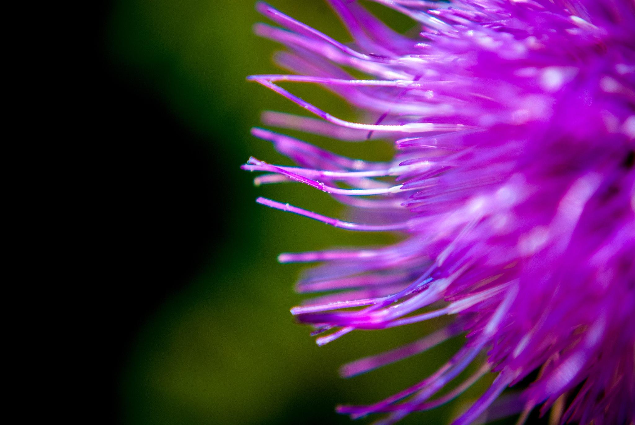 Purple by Miruna Sofrone