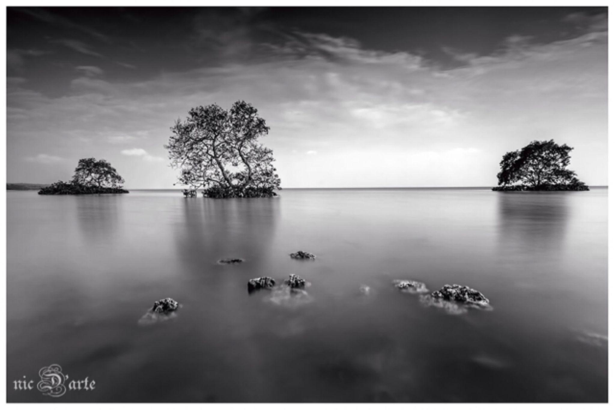 IMG_0055 by Nic D'arte
