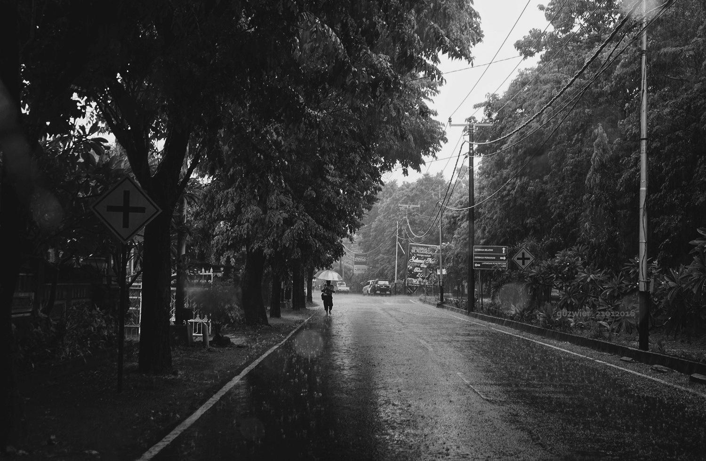 Rain by guzwier
