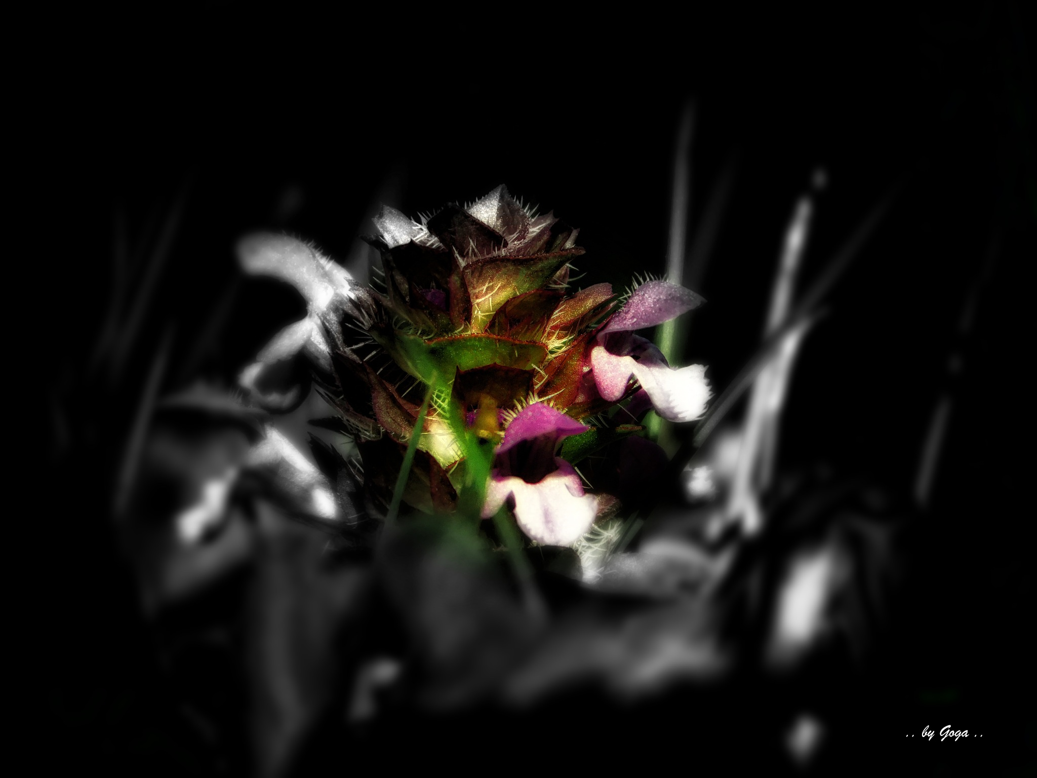 Untitled by goga22