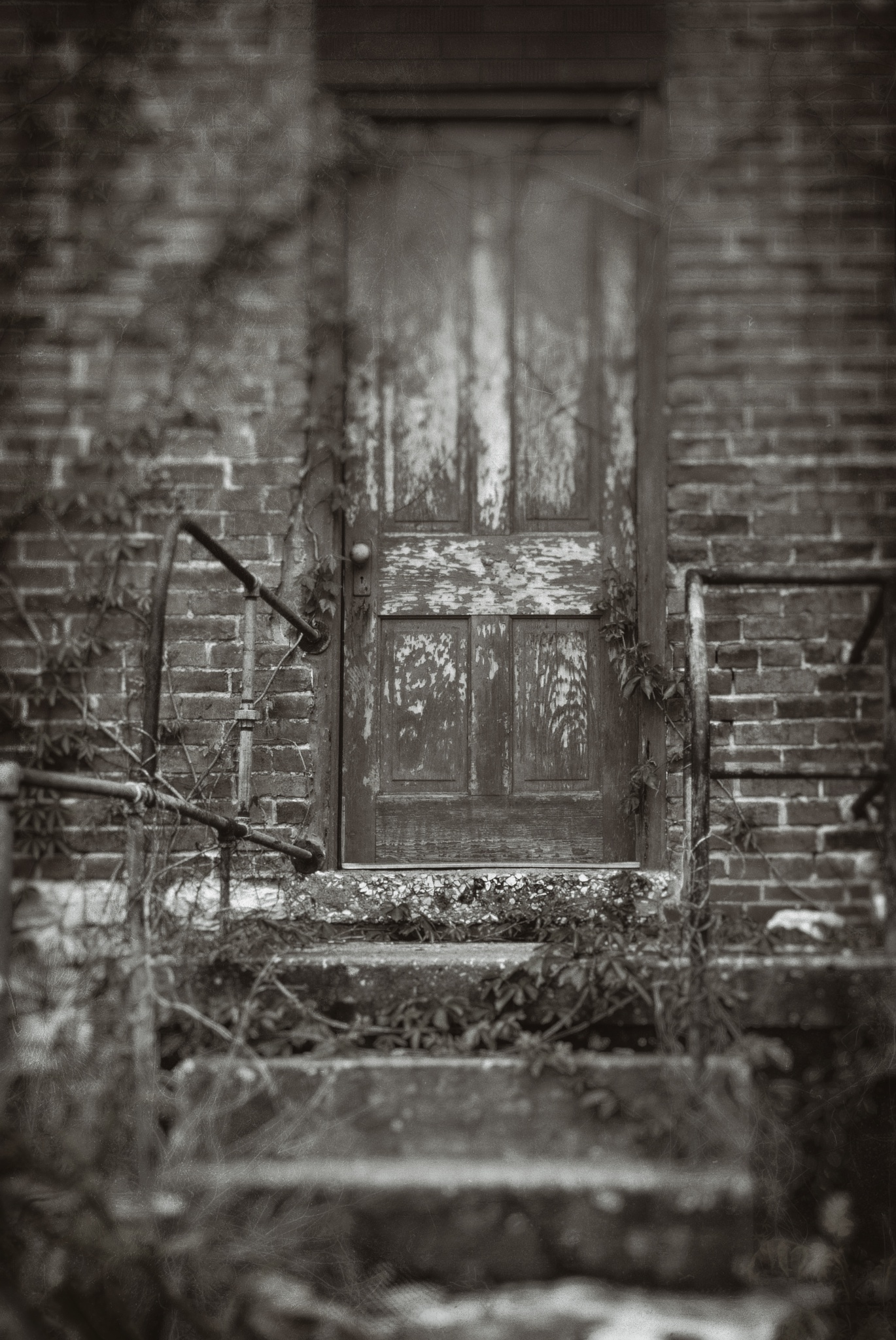 Photo in Black and White #fineart #fine art #blackandwhite #black and white #door #overgrown #over grown #forgotten #abandonned #vines #brick