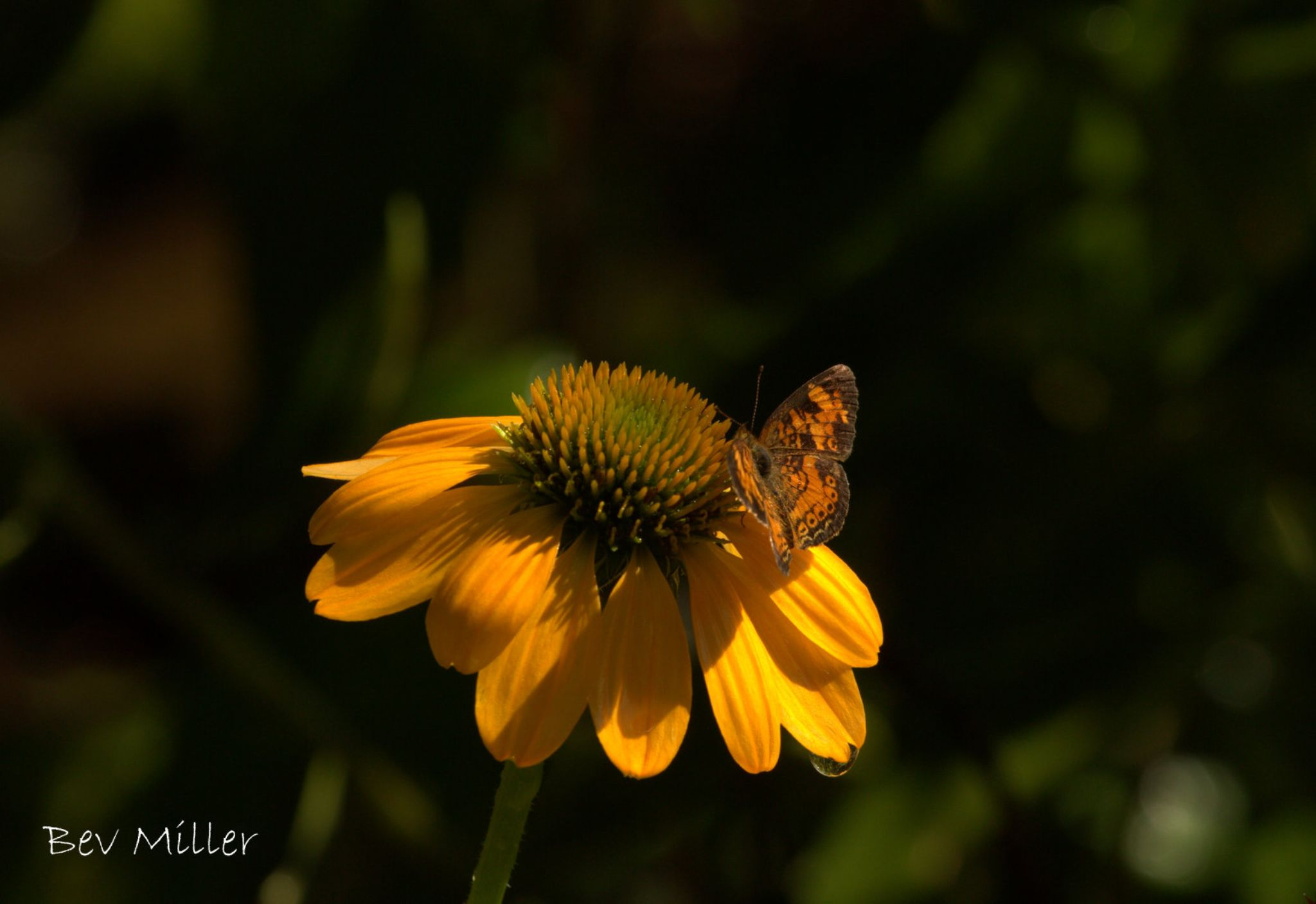 Flower, butterfly and droplet... by Beverly