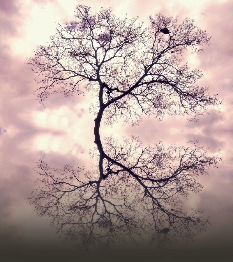 Reflections III by Jonny Santo