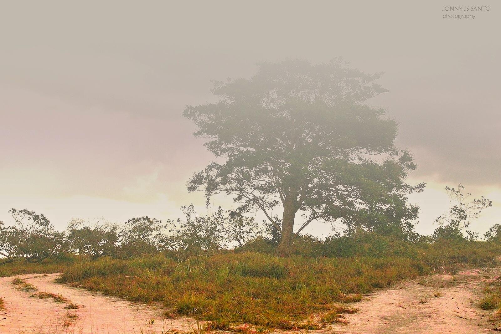 The Tree by Jonny Santo
