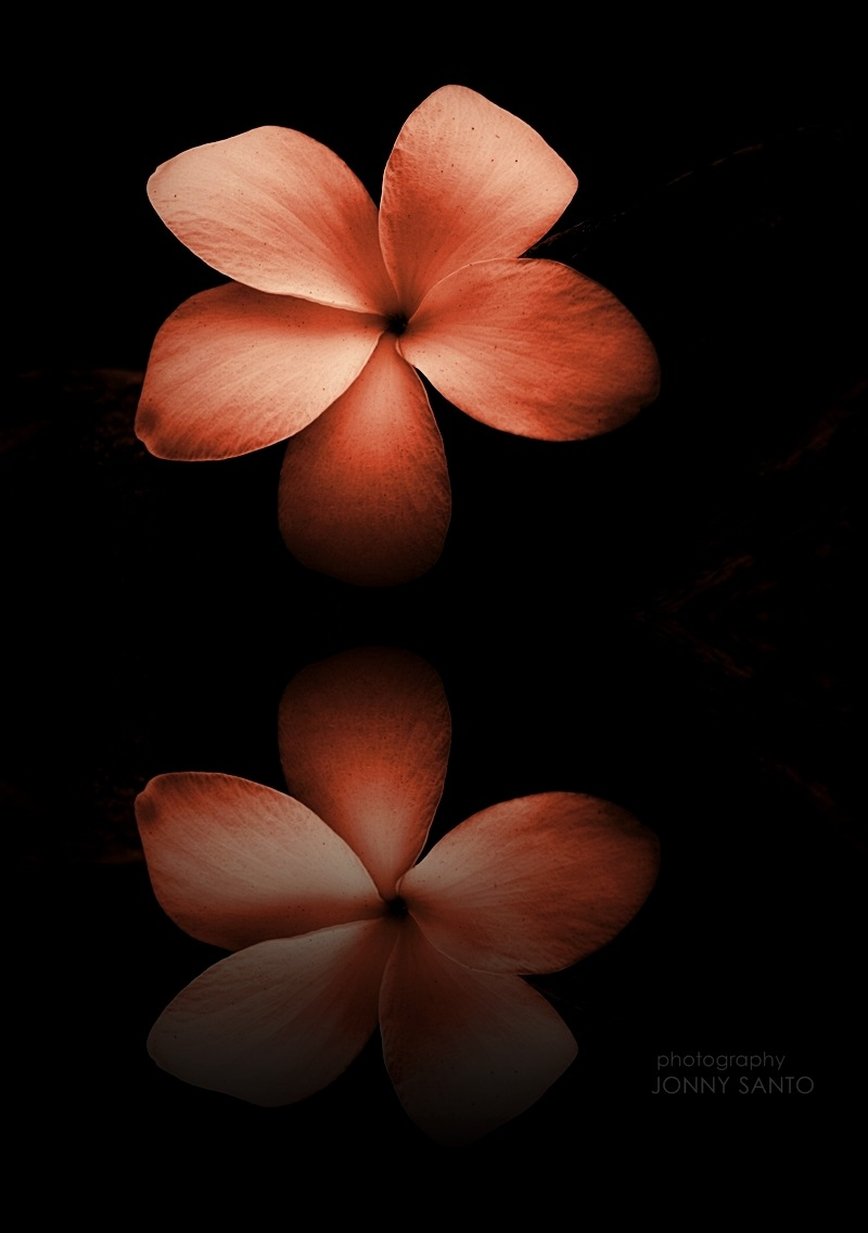 The Flower Reflection by Jonny Santo