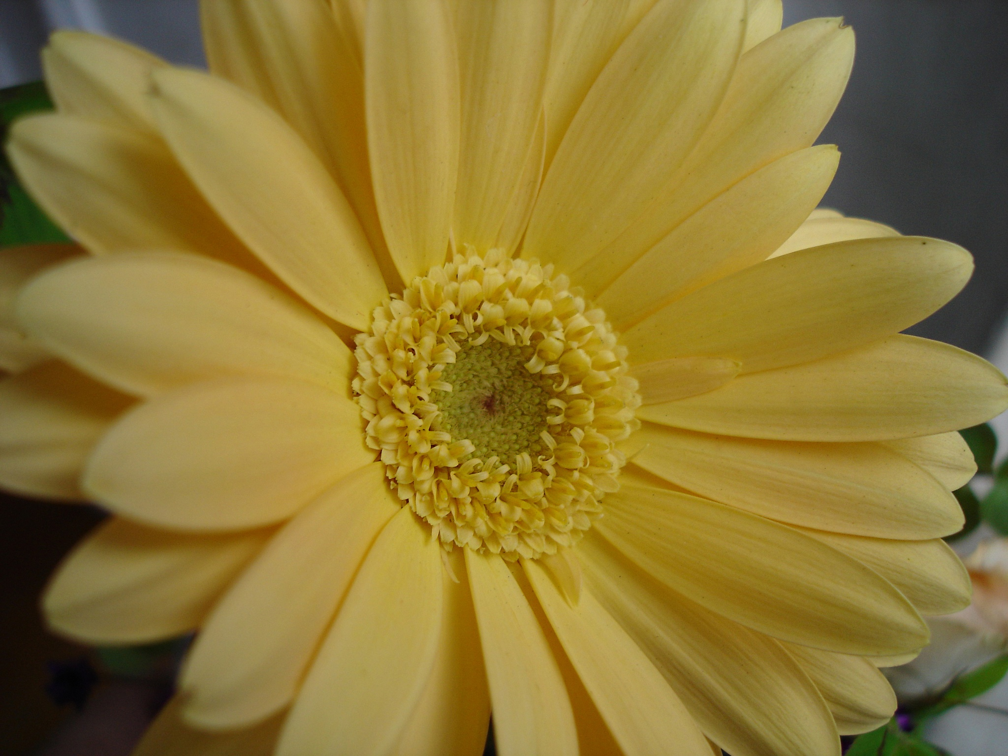 Sweet yellow by sidney ganho