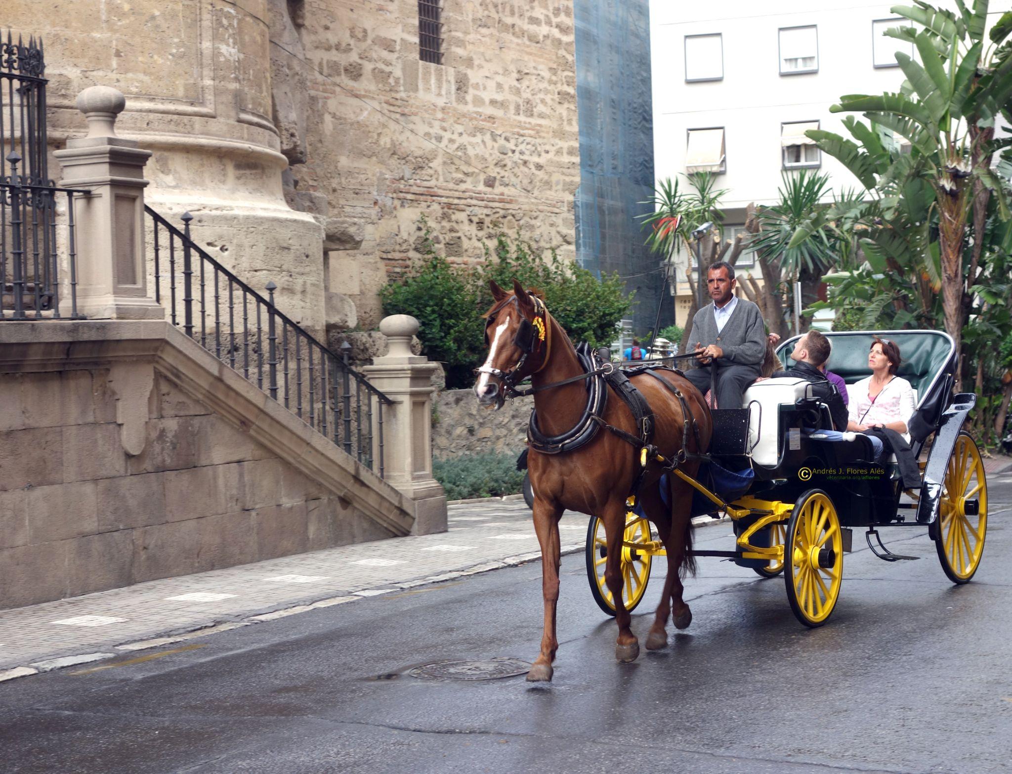 Paseo en coche de caballo by Andrés J. Flores Alés Veterinario