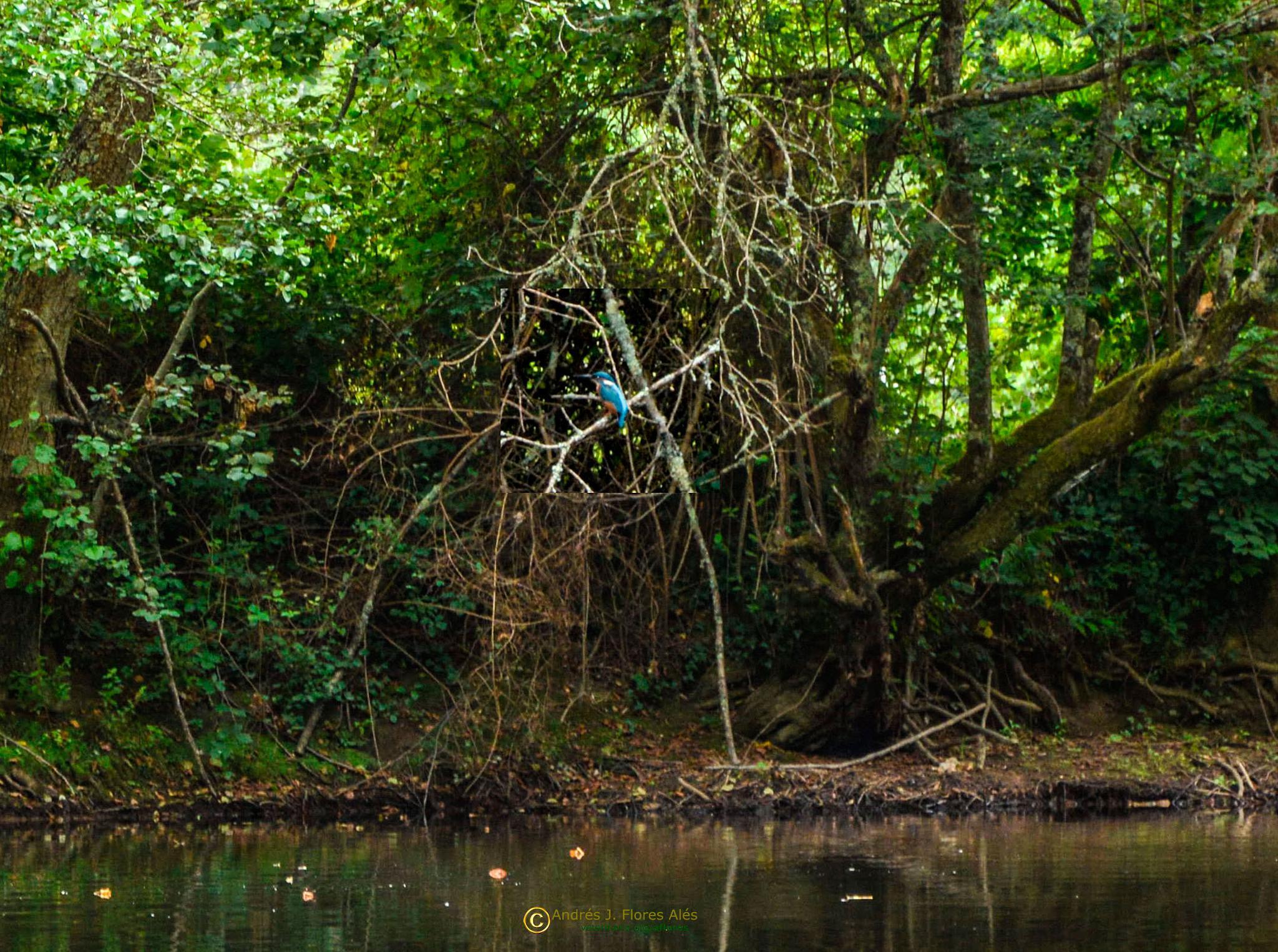 Martin en su entorno by Andrés J. Flores Alés Veterinario