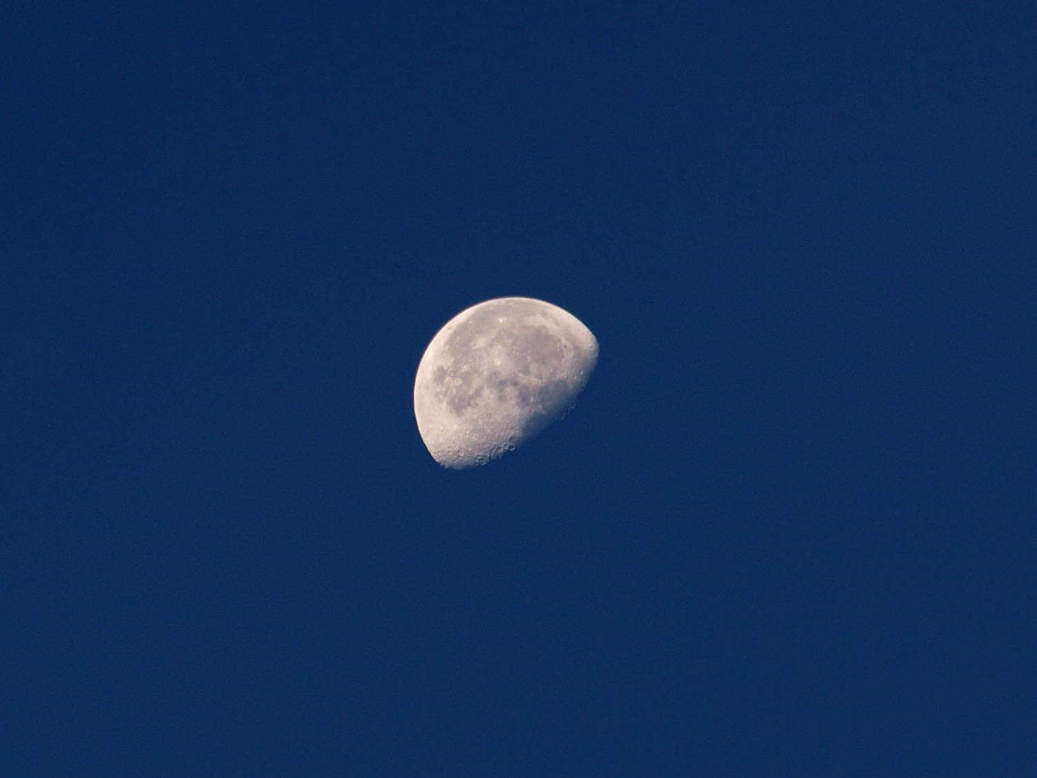 Morning Moon by Rich Wilson