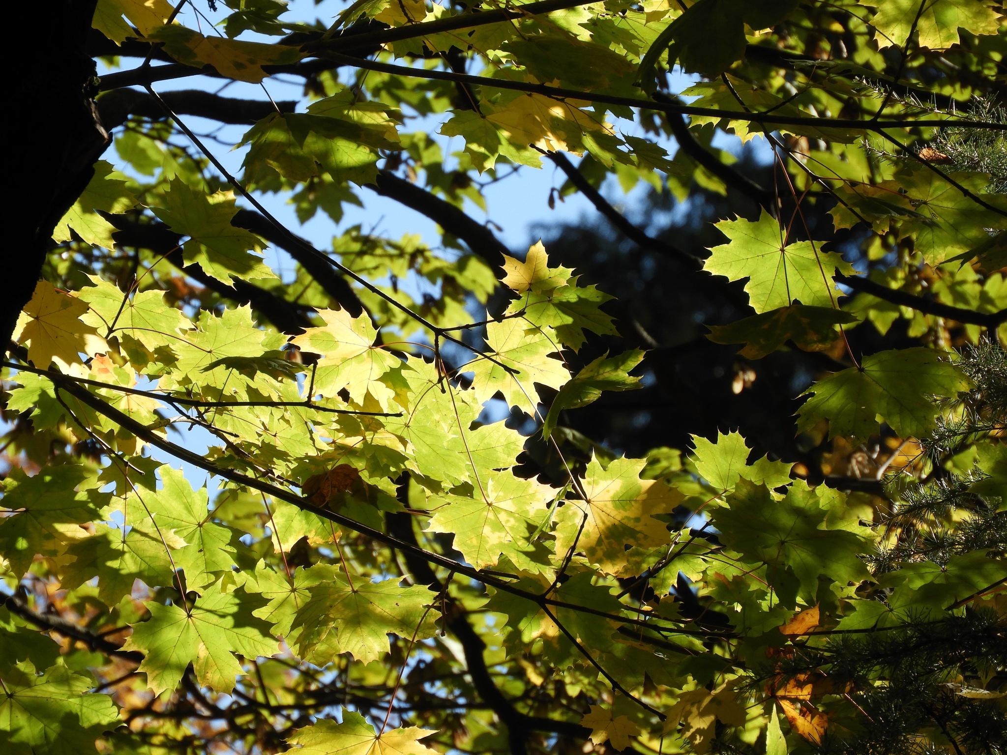 luce d'autunno 2  by Piergiorgio Martini