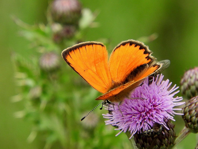 farfalla by Piergiorgio Martini