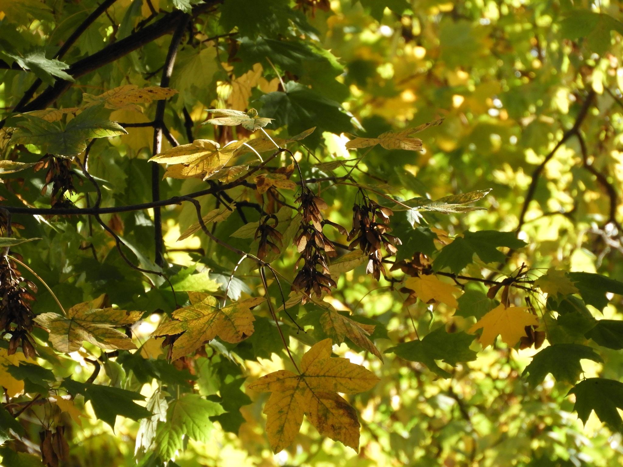 luce d'autunno by Piergiorgio Martini