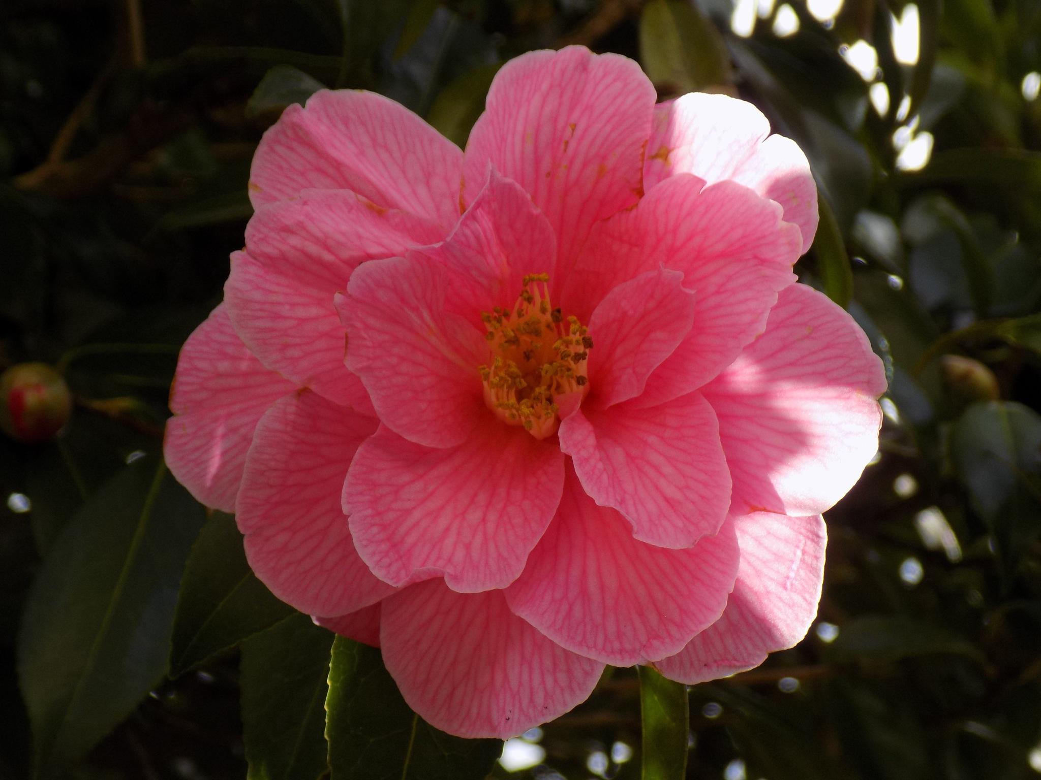 flower by peter kesic